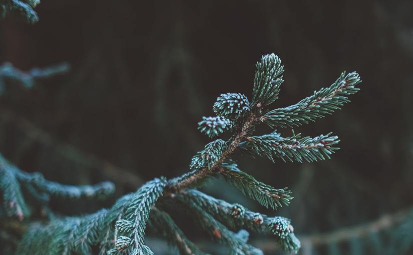 Evergreen Content Explained: What Is it?
