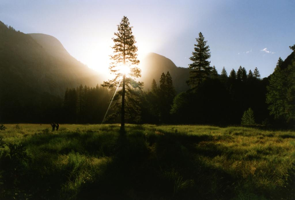 Photo of sun coming through evergreen tree